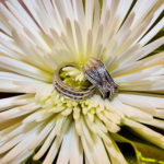 Wedding ring inside of flower